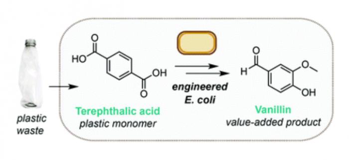 科学家开发新技术 利用工程细菌将降解的塑料瓶转化为香兰素